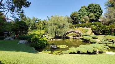 일본과 중국 정원이 최고 볼거리인 헌팅톤 라이브러리